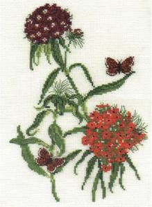 DMC Sweet William (BK413)